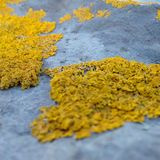 Amarillo-piedra Foto de archivo libre de regalías