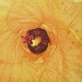 Amarillo rojo interior de Bali Indonesia de la flor Foto de archivo