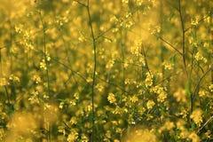 Amarillo suave imagen de archivo libre de regalías
