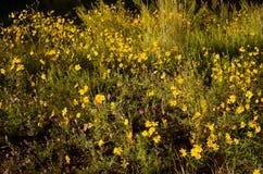Amarillo y púrpura Imagen de archivo libre de regalías