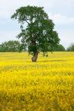 Amarillo y verde Foto de archivo