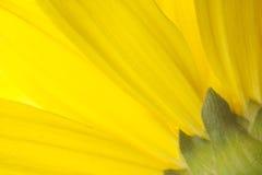 Amarillo y verde Fotografía de archivo libre de regalías