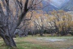 Amarillos maravillosos del otoño Imagen de archivo