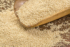 Amarnath grain scoop Stock Photography
