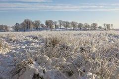 Amarre con los penachos de la hierba en nieve Foto de archivo