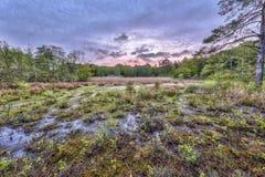 Amarre el pantano en el estado de Ontwijk fotografía de archivo libre de regalías