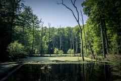 Amarrez l'étang avec des cadavres d'arbre image libre de droits