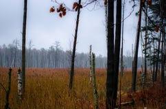 Amarrez la forêt photographie stock