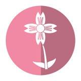 amarylka kwiatu naturalny cień royalty ilustracja