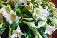 Amaryllis blüht Blumenstrauß Lizenzfreie Stockfotografie