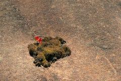 Amaryllis-bloem op rotsberg stock foto's