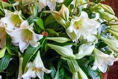 Amaryllis blommar buketten Royaltyfri Fotografi