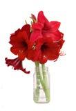Amaryllis bouquet - white isolation Stock Photos