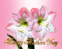Amaryllis da cor-de-rosa do cartão do dia de matrizes Imagens de Stock