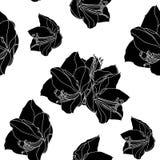 Amaryllis-hippeastrum bloeit lilly het zwart-witte naadloze patroon van de overzichtsschets royalty-vrije illustratie
