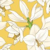Amaryllis-hippeastrum geel beige bloemenpatroon vector illustratie