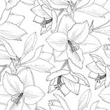 Amaryllis hippeastrum lily floral seamless pattern. Amaryllis hippeastrum lilly floral seamless pattern. Spring summer flowers detailed black and white drawing Stock Images
