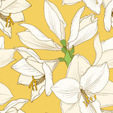 Amaryllis hippeastrum yellow beige floral pattern Royalty Free Stock Photography