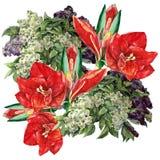 Amaryllis lila blomma, vattenfärg, bukett Royaltyfri Bild