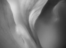 Amaryllis macro Royalty Free Stock Photos