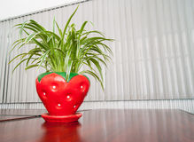 Amaryllis plants in the red jardiniere at office Stock Photos