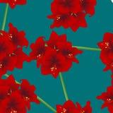 Amaryllis roja en Teal Indigo Background Día de la Navidad Ilustración del vector Fotografía de archivo