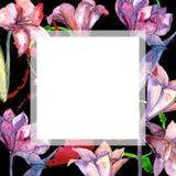 Amaryllis rose Fleur botanique florale Place d'ornement de frontière de vue Photo stock