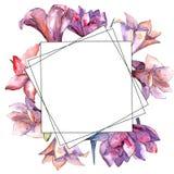 Amaryllis rose Fleur botanique florale Place d'ornement de frontière de vue Images libres de droits