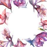 Amaryllis rose Fleur botanique florale Place d'ornement de frontière de vue Photos stock
