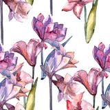Amaryllis rose Modèle sans couture de fond Texture d'impression de papier peint de tissu Images libres de droits