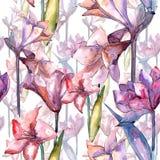 Amaryllis rose Modèle sans couture de fond Texture d'impression de papier peint de tissu Images stock
