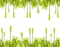 Amaryllis. Royalty Free Stock Photo