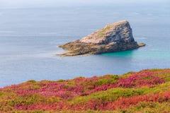 Amas du cap island Cap Fréhel. Beautiful triangular shaped rock island `Amas du cap` at Cap Fréhel in Brittany, France, with vibrant heather flowers Calluna Stock Image