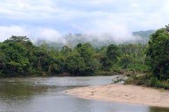 Amason sikt av den tropiska rainforesten, Ecuador Arkivbild