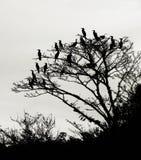 Amasonfåglar på trädet Arkivfoton