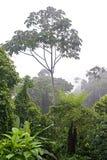Amasonrainforest Arkivbild