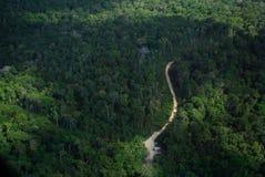 Amasonskog och väg Royaltyfri Foto