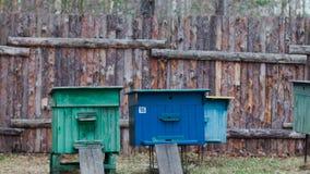 Amassez-vous pour des abeilles dans la clairière près de la maison clips vidéos