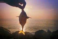 Amatörmässigt fiske i Indien 6 Denna triggerfish som fångas på musslakött Arkivfoto
