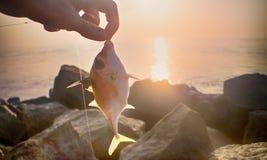 Amatörmässigt fiske i Indien 6 Denna triggerfish som fångas på musslakött Royaltyfri Bild