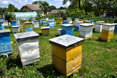 Amateur apiary near apartment building_5 royalty free stock photo
