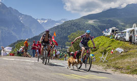 Amateur Cyclists in Pyrenees Mountains. Col de Val Louron-Azet, France- July 07,2013: Group of amateur cyclists and their dog climbing the difficult road to Col Royalty Free Stock Image