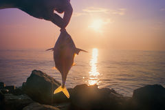 Amateur fishing in India 6. This triggerfish caught on meat Stock Image