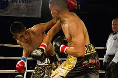 Amateur and Professional Boxing Stock Photography