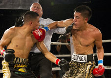 Amateur and Professional Boxing stock photos