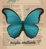 Amathonte bleu de Morpho de papillon d'impression de vecteur Dessin imprimable d'art à la vieille page de dictionnaire Image stock
