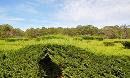 Amaze'n马格丽特里弗:俯视的树篱迷宫 免版税库存照片