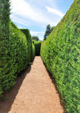 Amaze'n Margaret River Hedge Maze. MARGARET RIVER,WA,AUSTRALIA-JANUARY 16,2016: Manicured hedge maze path at the Amaze'n Margaret River botanical gardens in royalty free stock photography
