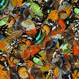 Amazed background made of pilling up colorful butterflies in different shapes and color, exotic texture royalty free stock photography