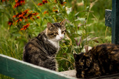 Amazed cats. Two amazed cats  sitting in a green enviornment Stock Photo